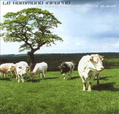 My First Political Dance Album - Le Hammond Inferno | Songs, Reviews, Credits, Awards | AllMusic