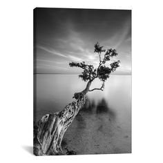 You'll love the 'Water Tree V' Photographic Print on Wrapped Canvas at AllModern - With Great Deals on modern Décor + Pillows products and Free Shipping on most stuff, even the big stuff.