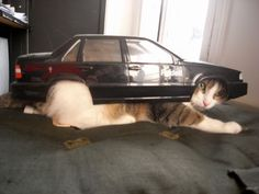Cut down on gas prices by placing a cat under your car.