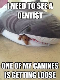 Maybe I should go see the dentist…