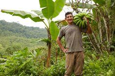 Wilson Sanchez, organic bananas farmer Muyuyacu Ecuador.