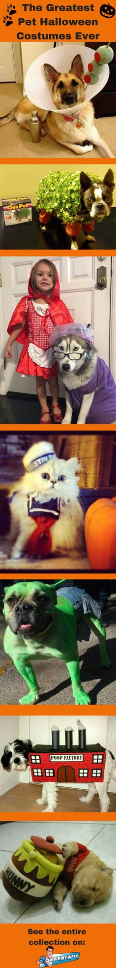 The Greatest Pet Halloween Costumes of All Time