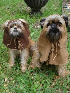 Ewoks-dogs. Trixie is def gonna be this for Halloween