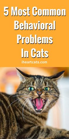 5 Most Common Behavioral Problems In Cats