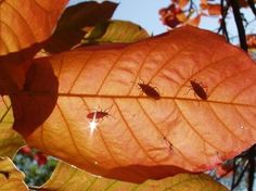 Springfield MO Pest Control - Pests that thrive in fall