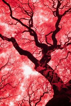 This piece which illustrates blood vessels is very fascinating as the arrangement of the veins and the way they scatter looks akin to that of trees in a forest blood vessels, Argentina, by Eugene Nikiforov, on Fernando Souza Tattoo, Beautiful World, Beautiful Images, Tree Forest, Blood Vessels, Nature Scenes, Tree Art, Nature Photos, Science Nature