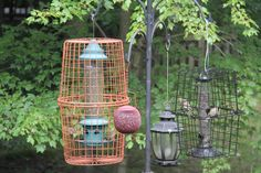I spent countless hours online to find a solution for the black birds and squirrels problems with the bird feeds in my backyard. I also spent hours going stores to stores finding ideas. And here is what I come up with. Get 2 metal baskets, put the feeder inside, tide the baskets together, hang the feed up, and enjoy watching the birds.....