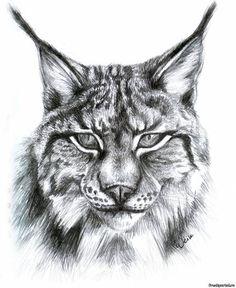 lynx sketch for tattoo (57) #tattoo #art