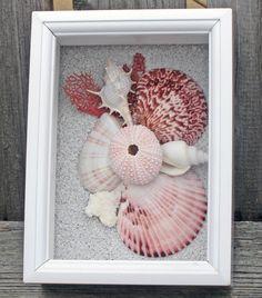 pink shell shadowbox