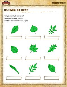 21 Best Leaf Science for kids. images | Science for kids ...