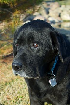 How to Understand and Help Prevent Black Dog Syndrome in 6 Steps - I have black dogs and they are wonderful- This is really sad that someone would believe this based on color of the dog!!
