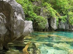 Kayangan Lake, Coron, Palawan, Philippines (Cleanest Lake in the Phillipines, probably all of Asia)