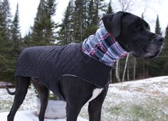 Those XL breeds sure can be hard to find jackets to fit them! Trust me I know! With 2 Great Danes of my own I struggled to find a jacket that