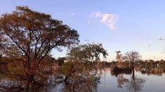 Garzas en el Lago de los Lirios otoño 2014, Cuautitlán Izcalli Estado de...