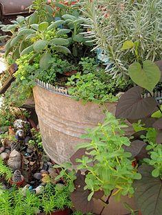 A bucket of herbs: rosemary, sage, marjoram, more