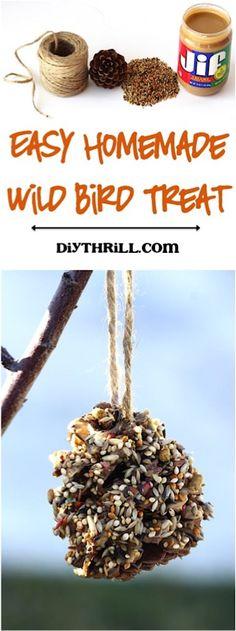 DIY Wild Bird Feeder!