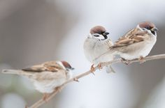 Three in a row by csabatokolyi on Flickr