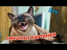 Самые смешные приколы #2 ∙  Прикольное видео 2015 ∙ Funny Video Compilat...