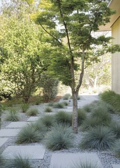 Front Yard and Garden Walkway Landscaping Inspirations 37 Side Yard Landscaping, Modern Landscaping, Front Yard Walkway, Landscaping Ideas, Front Yards, Walkway Ideas, Landscaping Software, Inexpensive Landscaping, Residential Landscaping