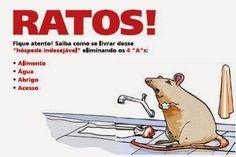 Blog do rato - Associação Brasileira de Franchising: SAIBA COMO ACABAR COM OS RATOS