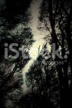 Moody Trees and Sky Abstract Nature Background royalty-free stock photo