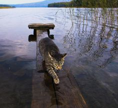 Teach a cat to fish n he's a catfish lol lol ... Couldn't resist the corniness n then laughin' at my own hick humor!! lol lol