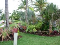 Seabreeze Landscaping, Fort Myers Landscape, Tropical Landscaping