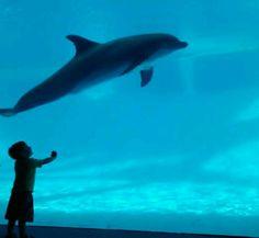 Texas State Aquarium Corpus Christi, Texas
