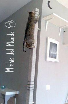 MICHIS DEL MUNDO: Palo Trepador - Rascador para Gatos | Scratcher stick
