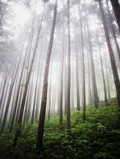A misty forest in Bosung, Republic of Korea.  The UN General Assembly declared 2011 as the International Year of Forests to raise awareness on sustainable management, conservation and sustainable development of all types of forests. UN Photo/Kibae Park