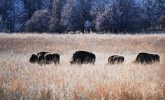 CNN's Ted Turner sold his Bluestem Ranch  to the Osage Native American Tribe