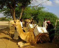 Mobile Camel Library. Kenia.