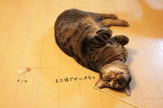 (* .-.)  #neko #cat   (via goma100323)