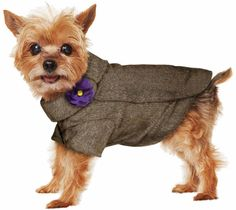 Prep your pet in the latest fall fashion from Martha Stewart Pets #marthastewartpets #petsmart