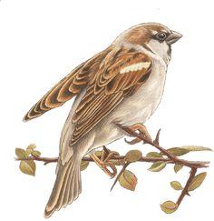 Vogels - francien van westering Bird Drawings, Animal Drawings, Different Forms Of Art, Bird Sculpture, Botanical Drawings, Bird Illustration, Watercolor Bird, Happy Animals, Bird Prints