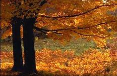 Autumn in The Adirondack Park in Upstate New York