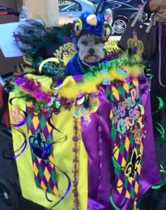 Helen Woodward Animal Center, Doggie Paws event. Covered dog stroller with fabric and decorations