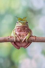grasshopper sitting on head of frog,sitting on branch