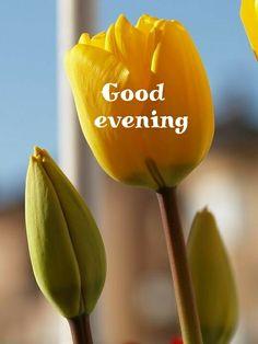 Good Evening Messages, Good Evening Greetings, Good Evening Wishes, Good Night Gif, Good Night Quotes, Morning Qoutes, Evening Quotes, Good Night Blessings, Romantic Night