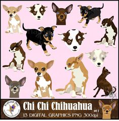 Chi Chi Chihuahua set 1 INSTANT DOWNLOAD dog graphics 14 gorgeous full color 8 huge Chihuahuas and 6 faces