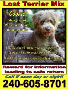Cookie                  Name : Cookie  Animal ID : 24239463  Breed : Terrier, Soft Coated Wheaten / MixLearn more  Age : 5 years 5 months  Gender : Male  Color : Tan / Grey  Spayed/Neutered : Yes  Size : Medium         Pet Memo  If you think you have found this pet, please contact Washington Humane Society at (202) 576-6664