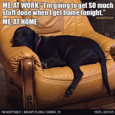 Am firmly convinced there must be some sort of sedative piping through the A/C vents at home...  #reality #mcaspets #doglife