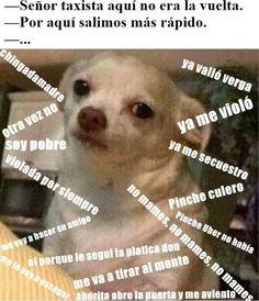 memes perro chihuahua enojado - Google Search