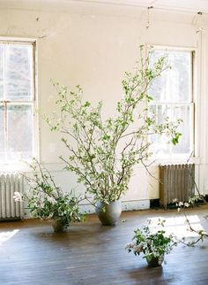 botanical MOOD INSPI