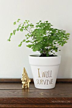DIY Gold Foil Lettering on Flower Pots. Need to give my plants positive affirmations to counter my non-green thumb!