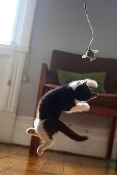 High jumping cat. Untitled | Flickr - Photo Sharing!
