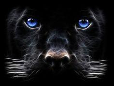 Windows 7 Black Panther