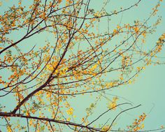 Spring tree photograph golden yellow mint aqua by dullbluelight