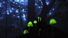 Just when you thought Japan couldn't get any cooler- Glowing Mushrooms