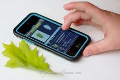 Phone App + Nature: Identify tree by taking pic of leaf!